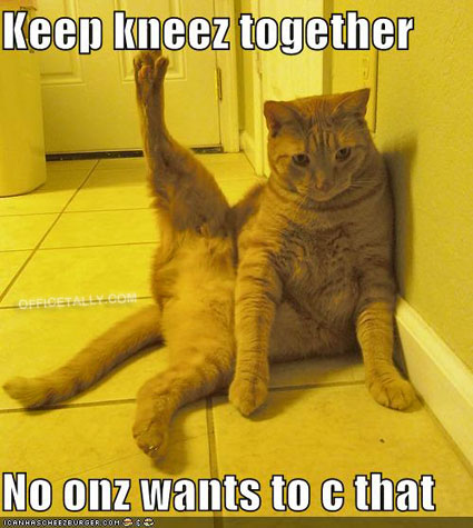 The Office Lolcat: Stress Relief