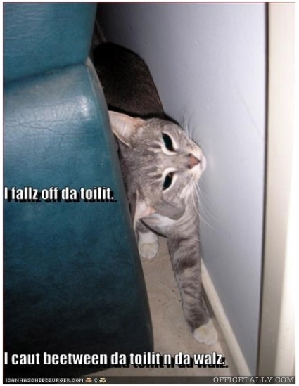 Lolcat The Office