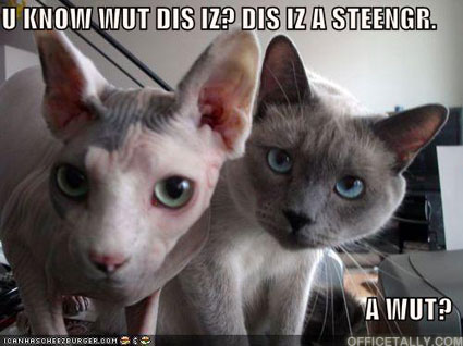 The Sting Lolcat by Chloe