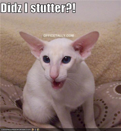 The Office Lolcat: Did I Stutter?