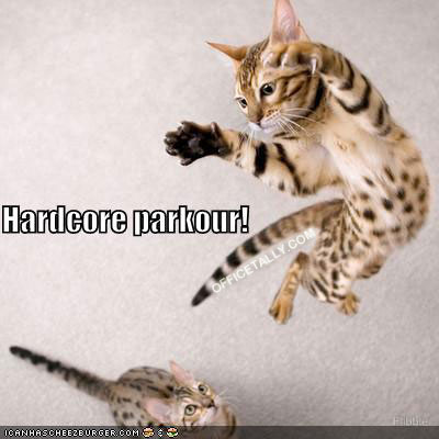 The Office Lolcat Hardcore Parkour