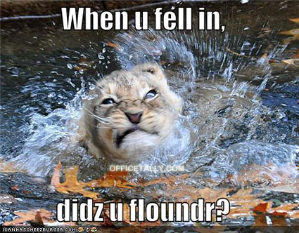 The Office Lolcat: Koi Pond